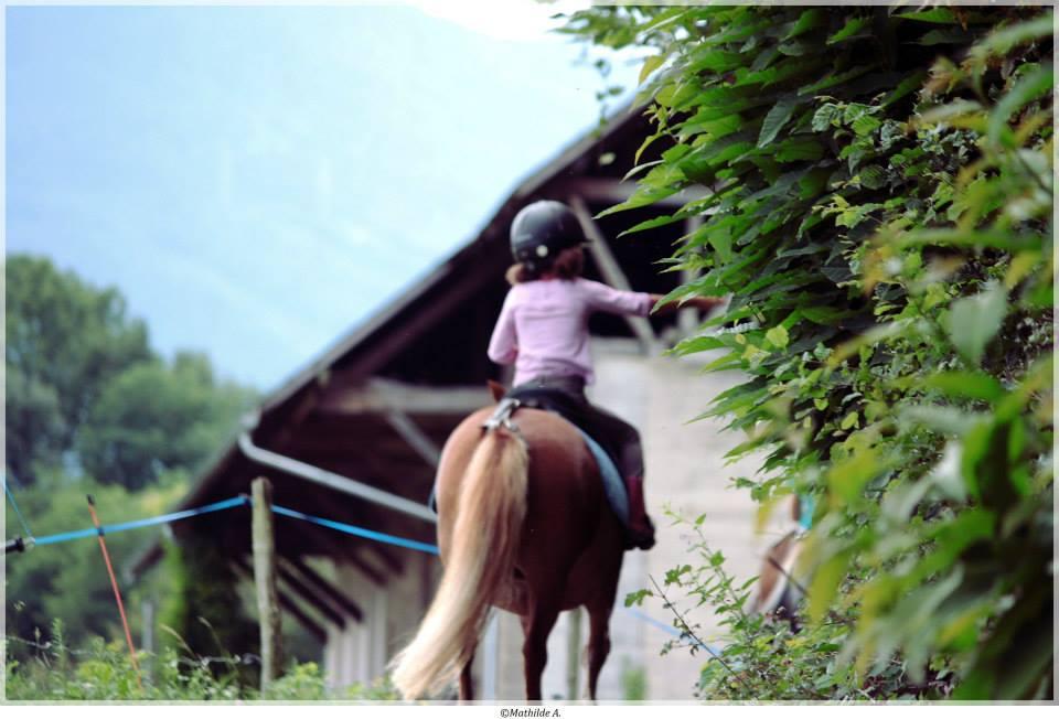 L'aide aux centres équestres est ouverte: 120 euros par cheval