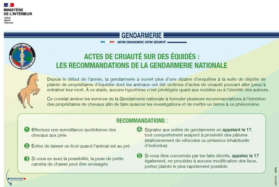 Actes de cruauté envers les équidés : recommandations et formulaire de contact gendarmerie