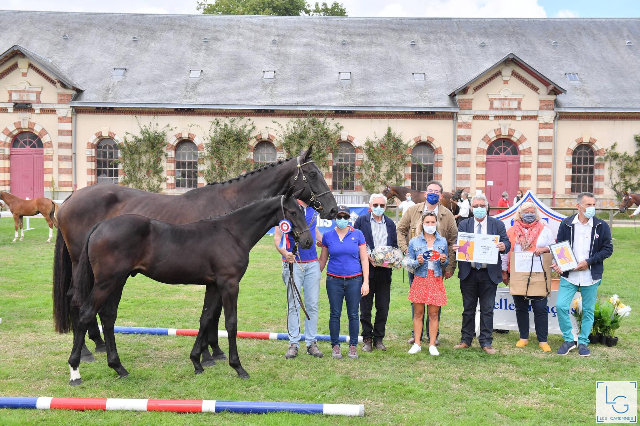 Championnats de France des Foals SF à St Lô : Kahann du Mondragon se classe 3ème