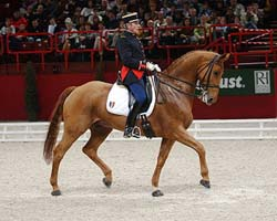 Stage Dressage avec Hubert PERRING