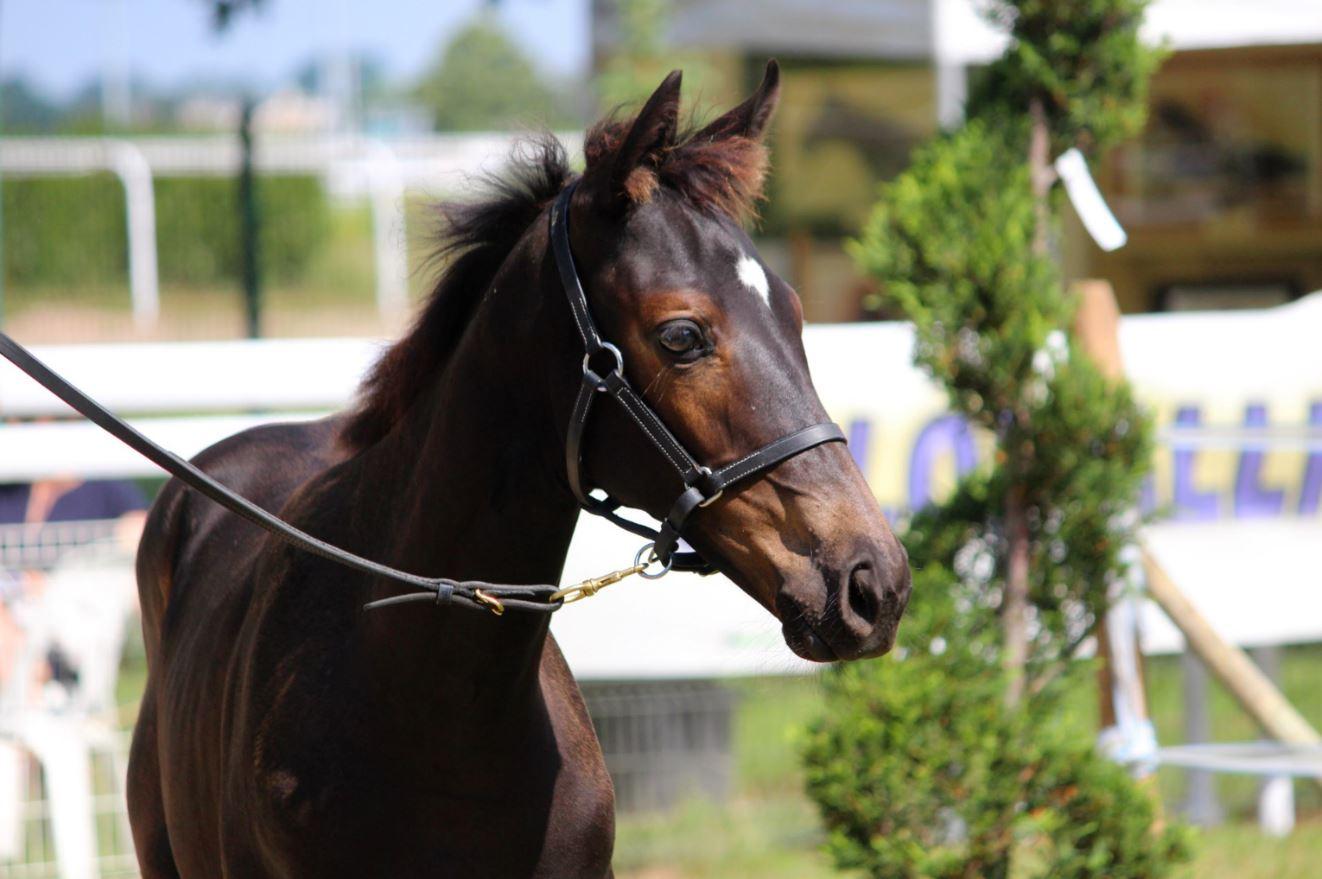 Offre de stage : Etat des lieux de l'utilisation de la génétique voie femelle dans l'élevage de chevaux de sport de Bourgogne Franche-Comté
