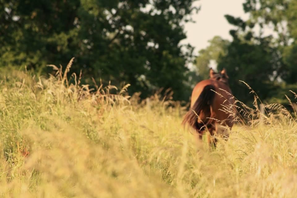 Gestion des prairies et du pâturage